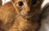 Meet Rusty...