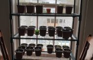 From Seeds To Sprouts!